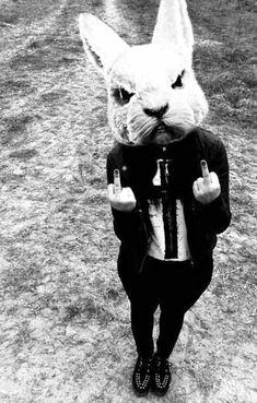 creepy-bunny-giving-finger | Team Jimmy Joe