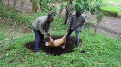 Gorilla blog: rangers protecting gorillas blog daily from DR Congo | Gorilla.cd
