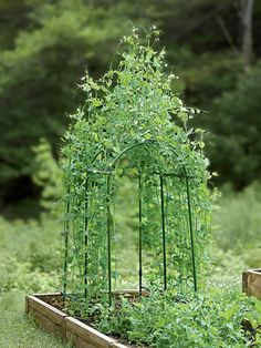 Pea Tunnel - makes the most of tight garden spaces and fits nicely in a 3' to 4' raised bed | Gardener's Supply Co.