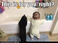 30 Funny animal captions - part 8, funny animal meme, animal pictures with captions, funny animal pictures Funny Cat Photos, Funny Animal Pictures, Cute Funny Animals, Funny Cute, Cute Cats, Animal Pics, Funny Images, Adorable Pictures, Funny Kids