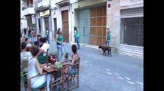 Lipdub canino by Ànima Canina en Alma Café Ontinyent