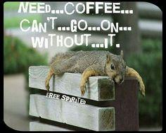 Squirrel coffee squirrel