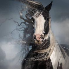 Nice to meet you. All The Pretty Horses, Beautiful Horses, Animals Beautiful, Cute Animals, Beautiful Beautiful, Painted Horses, Horse Pictures, Animal Pictures, Photo Animaliere