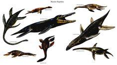 Reptilian Marine Reptiles
