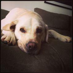 My amazing dog :-)