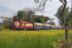 A little Narrow Gauge train among mustard fields... <3