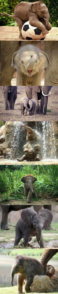 elephants. so cute!