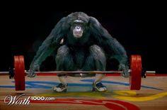 Weight Lifting Animal Olympics