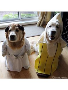 The Cutest Halloween Costumes for Dogs