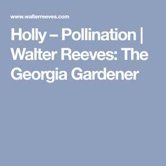 Holly – Pollination   Walter Reeves: The Georgia Gardener