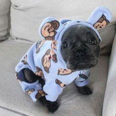 French Bulldog puppy in monkey pajamas ❤️