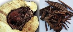 Agarwood (Oud) is used as a middle or base note and is a dark resinous heartwood from trees (Aquilaria) that are native to Southeast Asia. Its aroma is complex, deep, and woody,