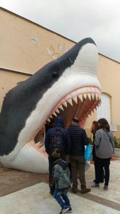 Sharkentrance #cittadellascienza #naples