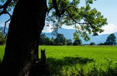 Vom Kloster Benediktbeuern aus laden mehrere Lehrpfade und Wanderwege zum Entdecken des Loisach-Kochelsee-Moors ein. Da es viel zum Sehen, Hören, Anfassen und Ausprobieren gibt, sind die Touren auch für Kinder spannend. Aber seht selbst …