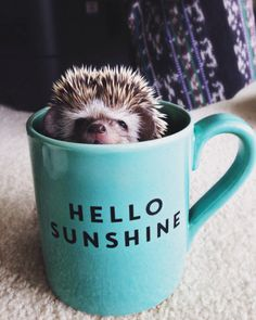 25 Funny and Adorable Hedgehog Pictures That Will Make You Want One Happy Hedgehog, Hedgehog Pet, Cute Hedgehog, Hedgehog House, Cute Baby Animals, Animals And Pets, Funny Animals, Small Animals, Hamsters