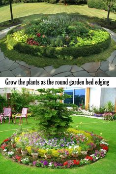 Grow the plants as t