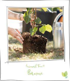 Plants, Tree Planting, Animales, Nice Asses, Plant, Planets
