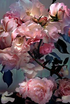 Roses by Nick Knight 2008