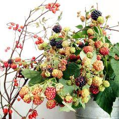 Emily Quinton (Photographer): Berries