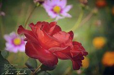 Welcome to my garden by AliciaZavala. @go4fotos