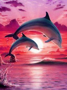 couchers de soleil et dauphins - Bing Images