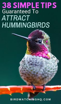 How To Attract Hummingbirds: 38 Simple Tips Guide Attracting hummingbirds See more hummingbirds in your backyard and garden this summer. Tips include everything from nectar feeders to native plants. Flowers That Attract Hummingbirds, How To Attract Birds, Attracting Hummingbirds, Hummingbird Nectar, Hummingbird Plants, Hummingbird Migration, Hummingbird Swing, Funny Bird, Humming Bird Feeders