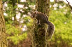 I use to have a squirrel that lived on my balcony in D.C.  He and the tree looked like this. :)