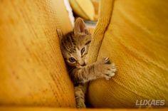 Chispi #gato