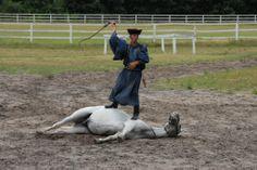 Bugac Puzsta - Horse show Show Horses, Hungary, Garden Sculpture, Outdoor Decor, Beautiful, Race Horses
