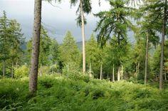 5.33 acres, Newby Bridge, South Lakes, Lancashire