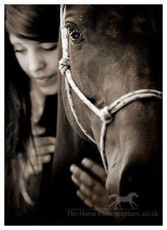 Gallery   thehorsephotographers.co.uk   Equine photography   Horse photography