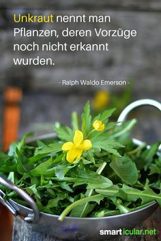 Unkraut nennt man Pflanzen, deren Vorzüge noch nicht erkannt wurden. - Ralph Waldo Emerson -