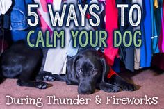 For parents of dogs that fear loud, unknown noises, a booming crack of thunder or the startling burst of fireworks in the distance can mean hours of heartache and helplessness trying to comfort our terrified...