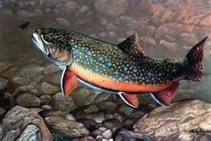 Brook Trout                                                                                                                                                                                 More