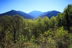 Love this view! The Smoky Mountains are such an amazing place.