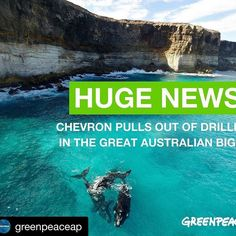 @greenpeaceap  HUGE NEWS!! Chevron has pulled out of the Bight! Thank you to all our amazing activists who took action to protect the Bight and the Southern Right Whales!  That's two oil companies down ONE to go! Let's get rid of Statoil too!  #thebight #whales #ocean #greenpeace #nooildrilling
