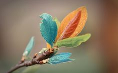 Colorful Leaves 1280x800
