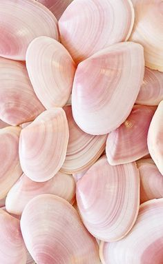 Creative Texture, Pink, and Shells image ideas & inspiration on Designspiration Pink Love, Pretty In Pink, Tout Rose, Rosa Pink, I Believe In Pink, Everything Pink, Pink Aesthetic, Pantone Color, Pantone 2016