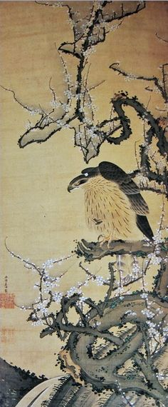 Ito Jakuchu (1716-1800) Hawk on a blossoming plum branch. Japanese Hanging scroll; ink and color on silk.