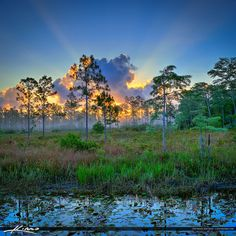 Cypress Creek Natural Area Sunrise Over Jupiter Florida | Flickr - Photo Sharing!