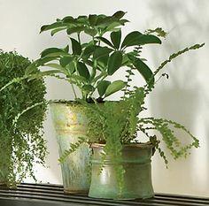 Wash Houseplants To Prevent Disease: Gardeneru0027s Supply. Indoor  GardeningIndoor ...