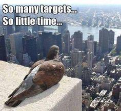 targets!