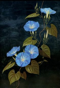 Paul Jones Flora Magnifica and Flora Superba botanical prints. I am still hunting a true blue morning glory - hoping the one planted now is that. Morning Glory Tattoo, Blue Morning Glory, Morning Glory Flowers, Australian Painters, Australian Artists, Art Floral, Illustration Botanique, Illustration Art, Watercolor Art