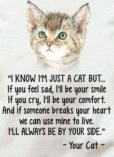 Cat Care Kittens You'll always be in my heart Tigger Trixie Tobie Jimmie Spanky Rudy a - Funny Cat Quotes Funny Cats, Funny Animals, Cute Animals, Wild Animals, Jungle Animals, Crazy Cat Lady, Crazy Cats, Cat Anime, Catsu The Cat