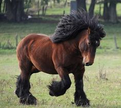 That is one heavy strong horse prancing happily along. Love that fuzzy coat and thick full bush mane.