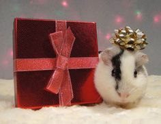 Holiday Piggie! So sweet! <3