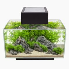 Modern Contemporary Fish Tanks
