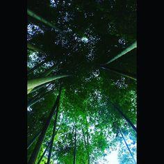 【yuya_nakatake_】さんのInstagramをピンしています。 《#写真好き#ファインダー越しの私の世界#綺麗#美しい#自然#山#川#森#人々#田舎#農家#ポートレート#風景#サンセット#bike#Photo#people#mountain#river#portrait#nature#cameraman#photographer#like#follow#love#sky#cordinate#竹》