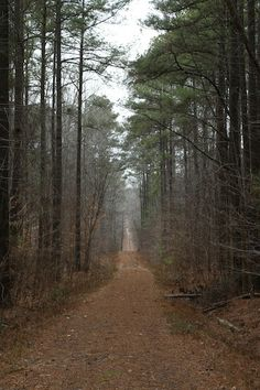 David Wells   Pathway in Wake Forest, NC