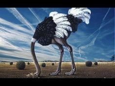 In this video you will see how they condition us to accept chemtrails. They put them in every possible place, from cartoons and video games to commercials an...